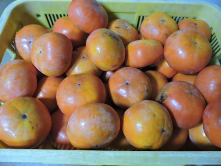 山口さんの富有柿