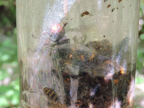 スズメバチトラップ1