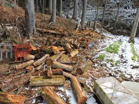 朽木の玉切り