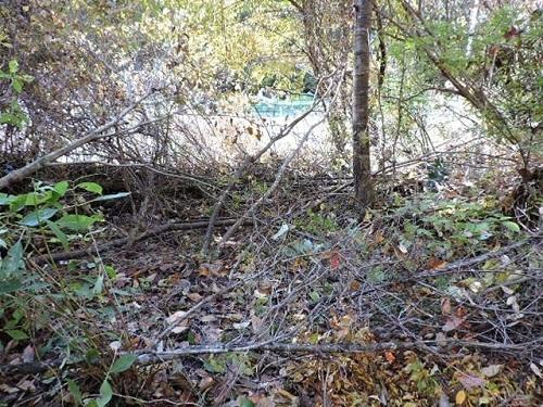 伐採光景4