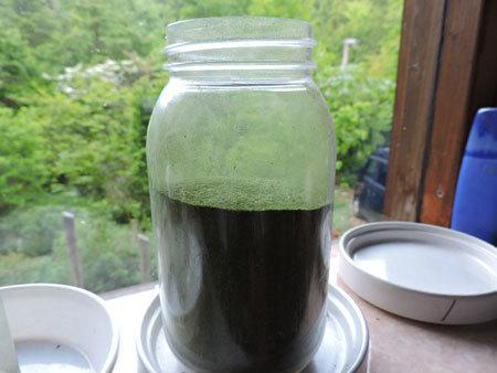 スギナ茶2