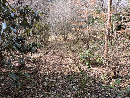 庭奥から見た小道