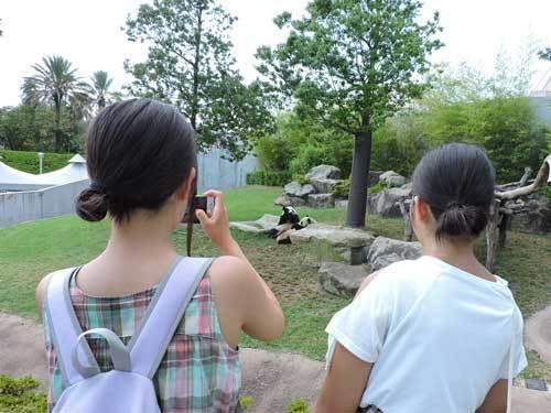 双子のパンダ2