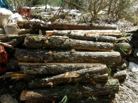 杉で薪作り