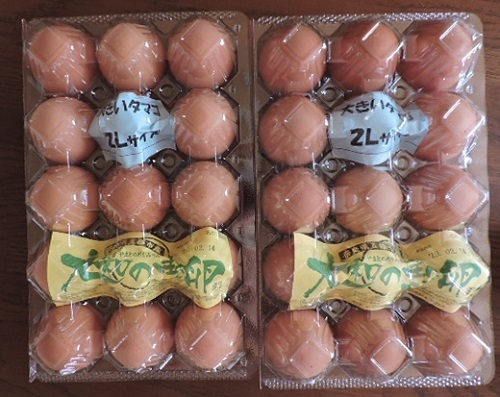 大和の恵卵