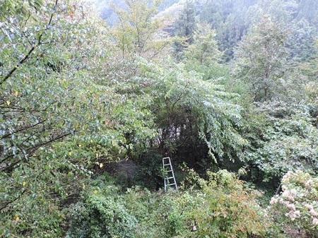 樹木の整理