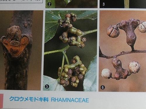 樹に咲く花3
