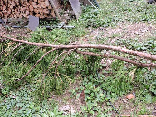 5本目の伐採3