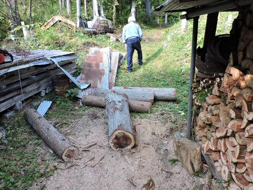 5本目の伐採4