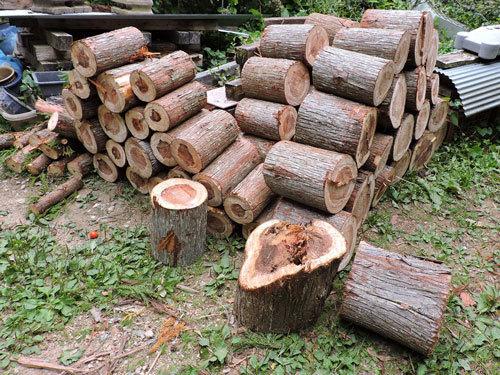 5本目の伐採5