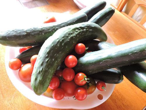 最後のキュウリとミニトマト
