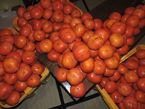 晩生の富有柿