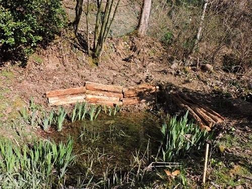 ログ前の小池2