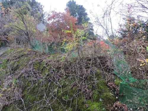 前面道路際の崖1
