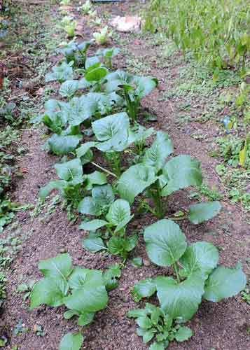 ミニ菜園2