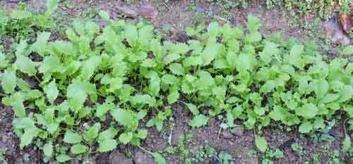 ミニ菜園3