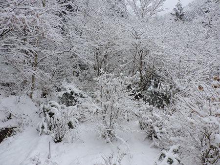 1月5日積雪1