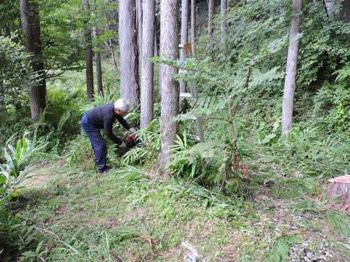 二本目の伐採1