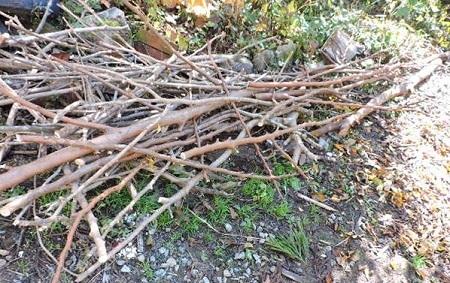 枝木の処理1