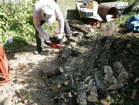 薪作り、落葉樹編完了