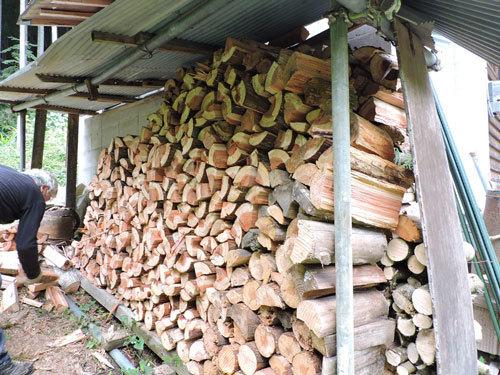 伐採3本目3