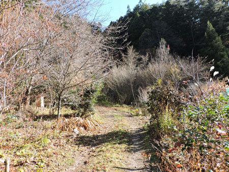 裸木の庭1