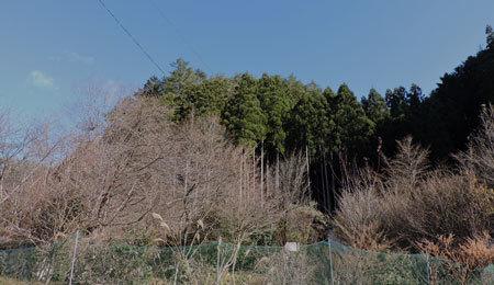 裸木の庭2