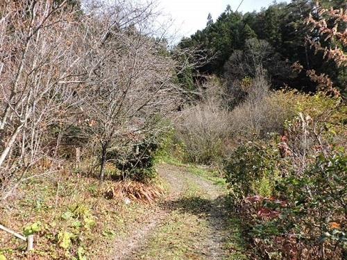 昨日の山の庭