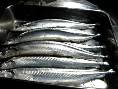 秋刀魚どっさり