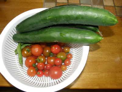 キュウリ&ミニトマト