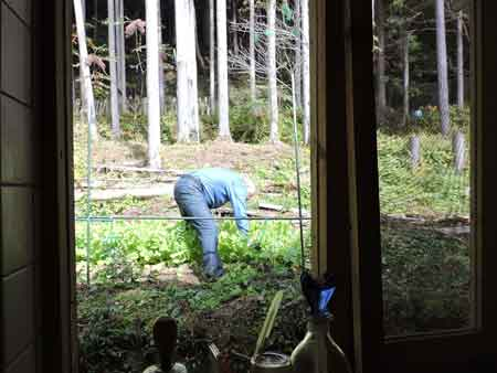 間引き菜を摘む