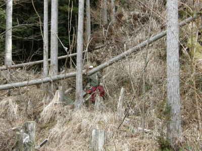 薪作り(1)