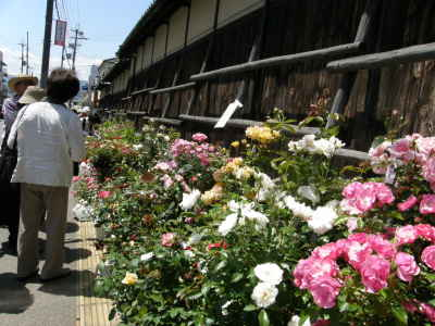 かげろう座2010-03