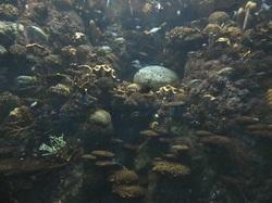 魚の群れ2