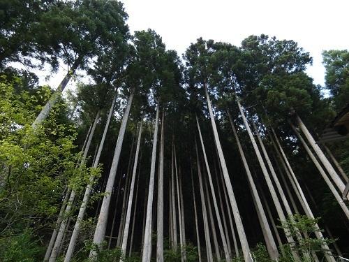 敷地奥の杉林