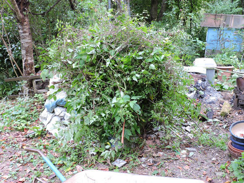 雑草と朽木の処理1