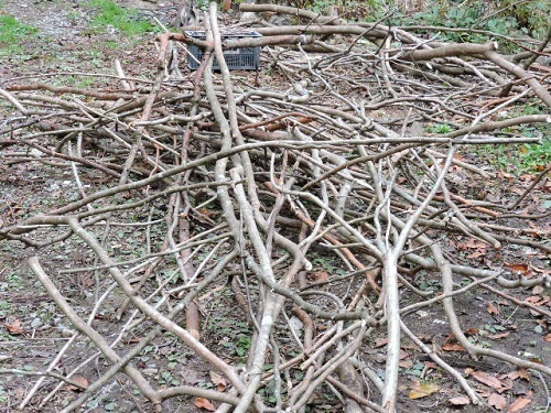間引き伐採処理1