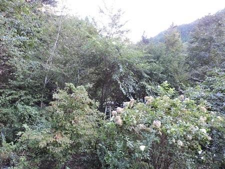 ログ前の庭
