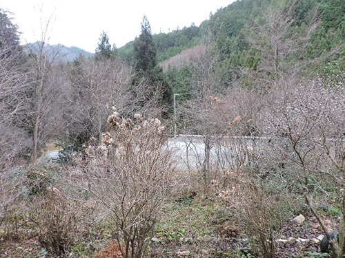 冬枯れの山の庭