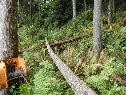 伐採光景1