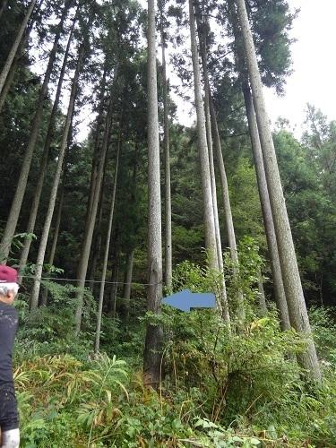 伐採光景2