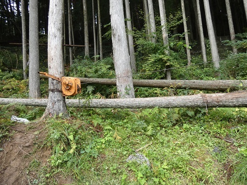 伐採光景7