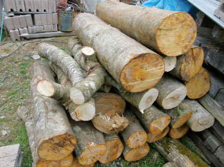 伐り出したホダ木