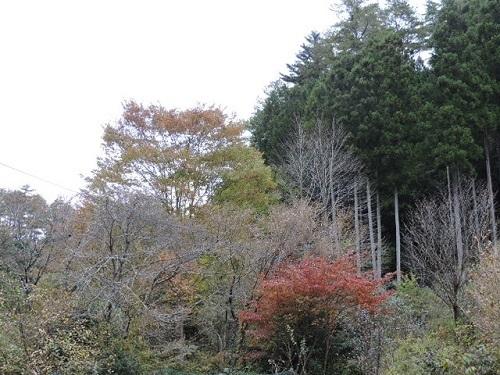 紅葉の庭2