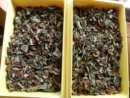 ドクダミ茶茶