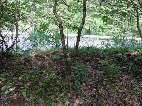 育樹園に移植している山野草