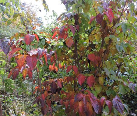 山の庭の紅葉6