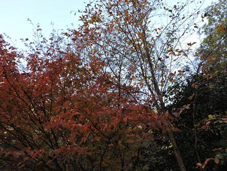山の庭の紅葉5