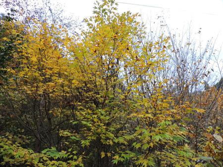 山の庭の紅葉7
