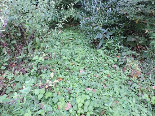 草だらけの庭奥への小道